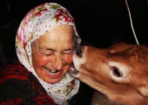 woman cow